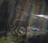 Animal Tales header Deer