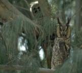 Animal Tales header Owl