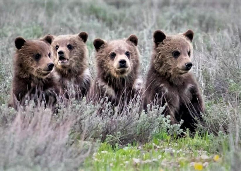 399s 4 cubs